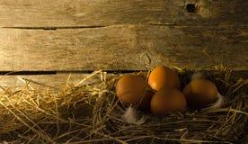 Fega ägg i den fega coopen Arkivbild