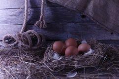 Fega ägg i den fega coopen Royaltyfri Foto