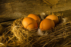 Fega ägg i den fega coopen Royaltyfria Foton