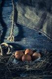 Fega ägg i den fega coopen Arkivfoton