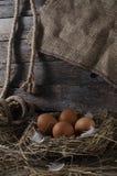 Fega ägg i den fega coopen Arkivbilder
