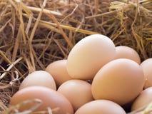 Fega ägg i fegt rede Royaltyfria Foton