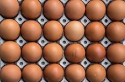 Fega ägg i pappers- panel Royaltyfri Bild