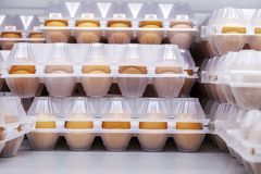 Fega ägg i plast- förpacka Bekläda beskådar fotografering för bildbyråer