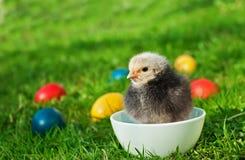 fega ägg little Royaltyfri Fotografi