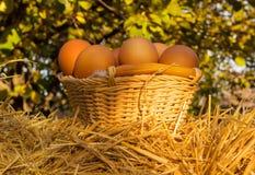 Fega ägg på korg arkivfoton