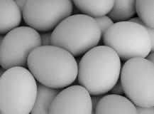 fega ägg w för b Royaltyfri Foto
