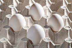 Fega vita ägg i en kassett Arkivfoton