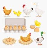 Fegt förpacka för andfågelungeägg och fega ägg på redena vektor illustrationer
