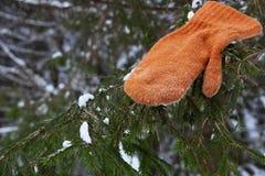 Fehlender Handschuh auf dem Tannenbaum im Winter Stockfotografie