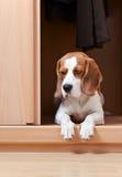 Fehlender Hund Stockfotografie