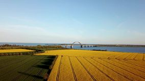 Fehmarn Bridge and Rapeseed Field Aerial View stock video