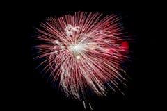 Feierfeuerwerke auf schwarzem Himmelhintergrund Lizenzfreie Stockfotografie