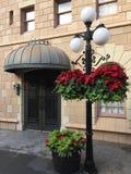 Feiertags-Poinsettias lizenzfreie stockbilder
