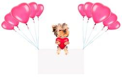 Feiertagsfahnen mit Ballonen und Hund Stockfotografie