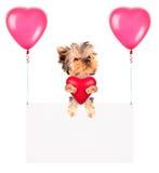Feiertagsfahnen mit Ballonen und Hund Stockfoto
