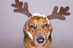 Feiertagshund Stockfotografie