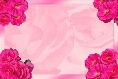 Feiertagskarte mit rosa Rosen Lizenzfreies Stockfoto