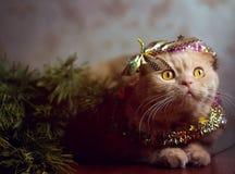 Feiertagskatze in neues Jahr ` s Eve Stockfotografie