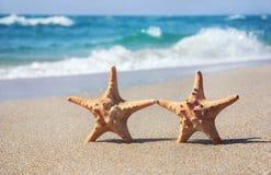 Feiertagskonzept - zwei Meeressterne, die auf Sand gehen, setzen gegen wa auf den Strand Lizenzfreie Stockfotos