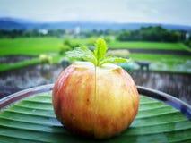 Feigen-Frucht Lizenzfreie Stockfotos