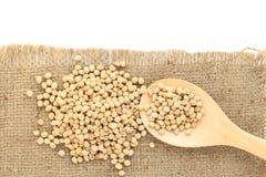 Feijão da soja Imagem de Stock Royalty Free