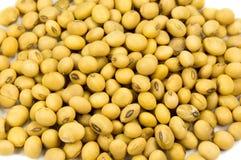 Feijão da soja isolado Imagens de Stock