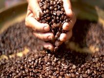 Feijão de café da goma-arábica na mão do fazendeiro filme