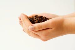 Feijão de café da terra arrendada. Imagens de Stock
