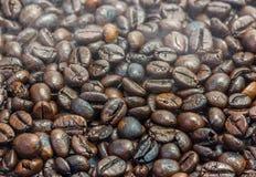 Feijão de café Roasted Imagem de Stock