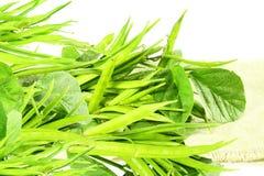 Feijão de conjunto ou guar sido vegetal indiano no fundo branco imagem de stock