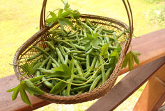 Feijão de corda verde em uma cesta wattled Fotografia de Stock Royalty Free
