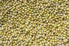 Feijão de mung verde imagens de stock royalty free