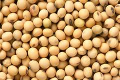 Feijão de soja Imagens de Stock