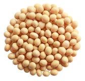 Feijão de soja Foto de Stock