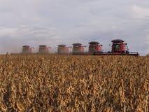 Feijão de soja da colheita Fotos de Stock Royalty Free