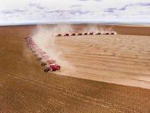 Feijão de soja da colheita Imagens de Stock