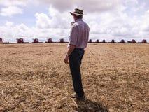 Feijão de soja da colheita Fotos de Stock