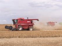 Feijão de soja da colheita Imagem de Stock Royalty Free