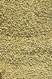 Feijão de soja na terra Imagem de Stock