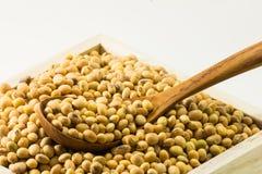 Feijão de soja secado ascendente fechado Imagens de Stock