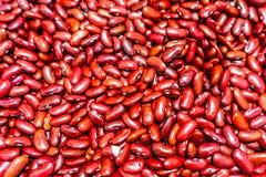 Feijão vermelho vermelho imagem de stock