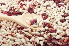Feijões crus vermelhos e brancos Foto de Stock
