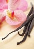 Feijões da baunilha e flor do orhid Imagens de Stock Royalty Free