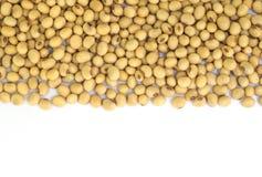 Feijões da soja. Imagens de Stock Royalty Free