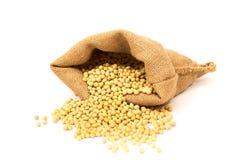 Feijões da soja Imagem de Stock