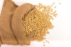 Feijões da soja Foto de Stock