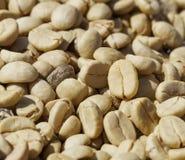 Feijões de café com pele do pergaminho, após a polpa e a pele exterior Foto de Stock