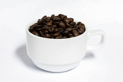 Feijões de café com terra da parte traseira do branco, café fresco Imagem de Stock Royalty Free