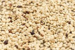 Feijões de café crus Imagem de Stock Royalty Free